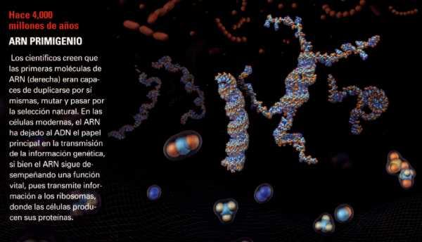 Resultado de imagen de La diversidad de la vida primigenia
